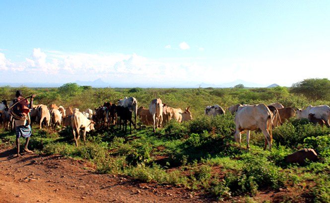 A herder in Sololo location, Moyale Constituency